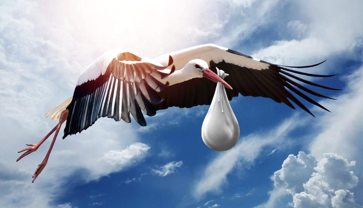 bird-3058712_960_720