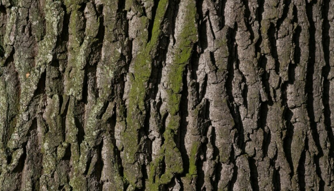 bark-207252_1920